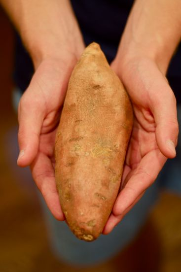 All sweet potatoes used in this project were from Faison, NC.